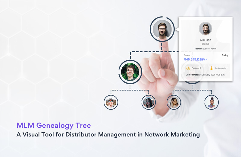 MLM genealogy in network marketing